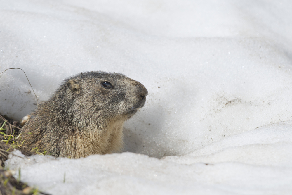 Groundhog Day: Early Snow melt or More Snow?